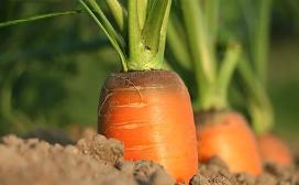 imagem Agricultura
